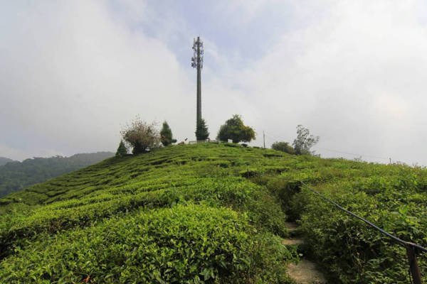 BOH Tea Estate View Point