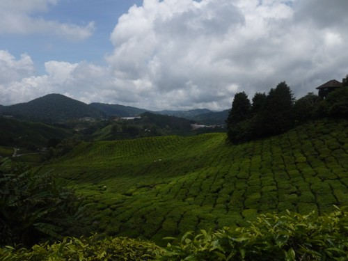 29 Must-See Cameron Highlands Attractions (New Guide 2019)