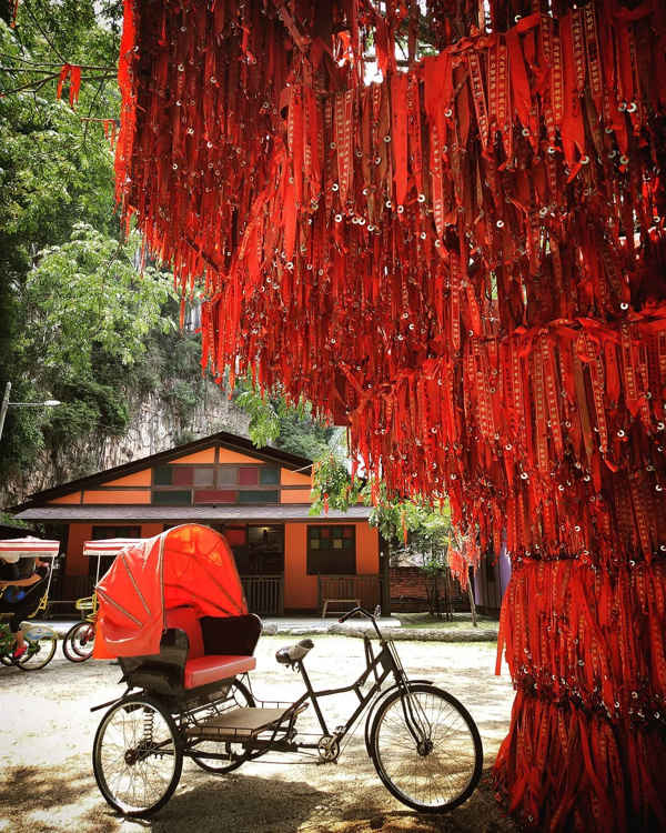 Banyan wish tree at Qing Xin Ling Leisure & Cultural Village