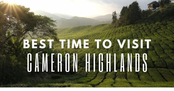 Best Time To Visit Cameron Highlands