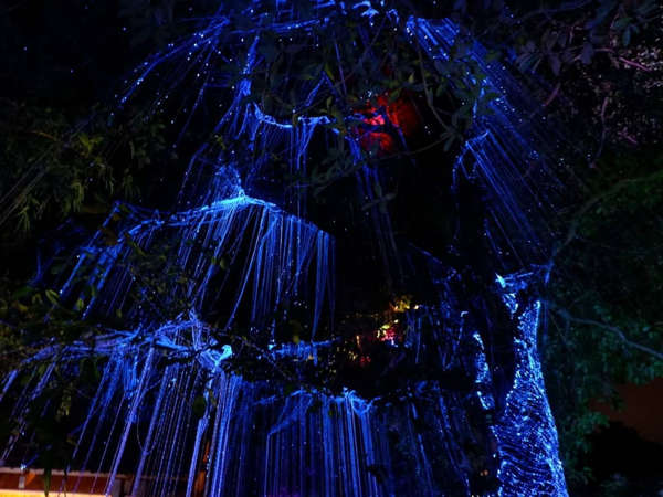Blue Lights In The Trees At Penang Avatar Secret Garden