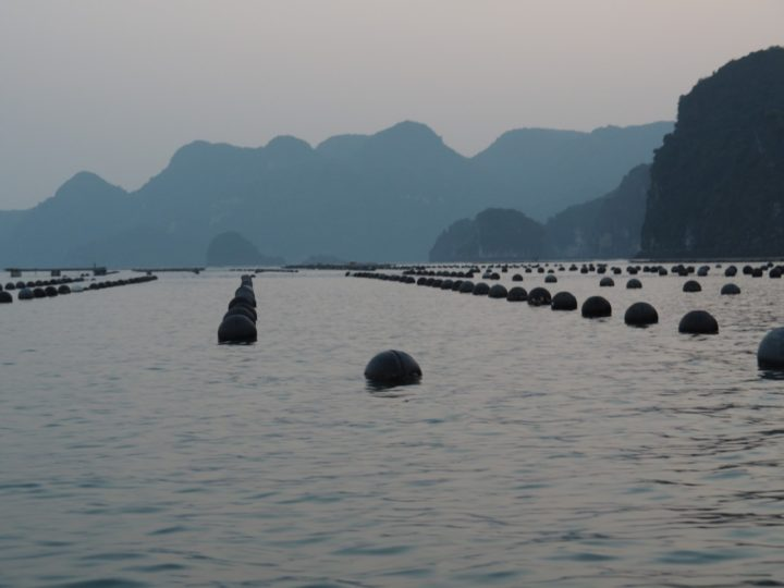 Buoys to avoid when kayaking in Halong Bay
