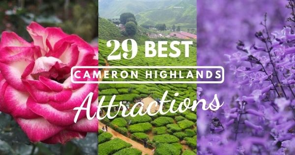29 Must-See Cameron Highlands Attractions + Things To Do (New Guide 2020)