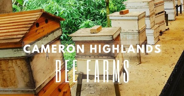 Cameron Highlands Bee Farms