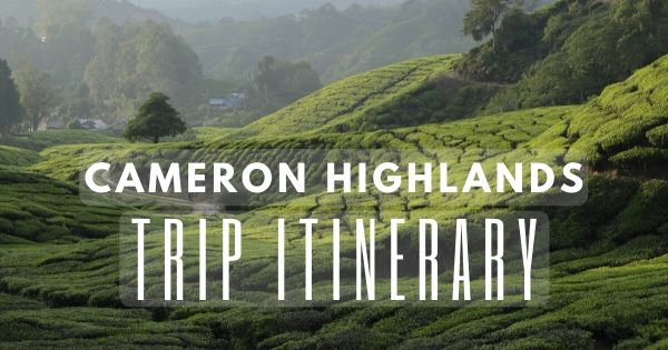 Cameron Highlands Trip Itinerary