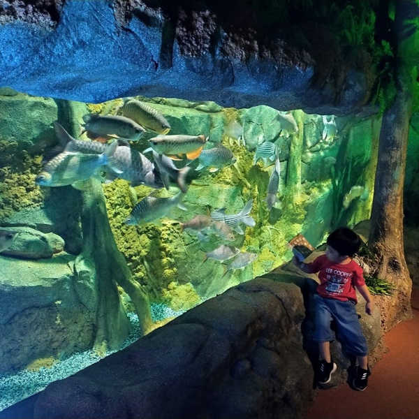 Children Can See Different Fish At The Top Boutique Aquarium In Penang