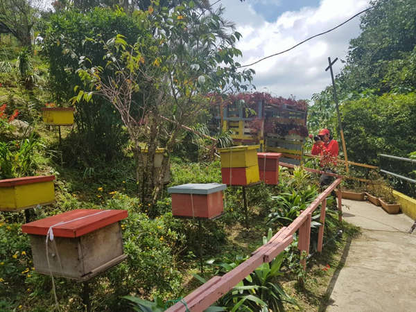 Colorful Bee Hives In The Garden Of Ee Feng Gu Honey Bee Farm