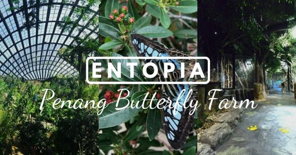Entopia By Penang Butterfly Farm (2020 Review) – Walk Among Hundreds Of Live Butterflies!