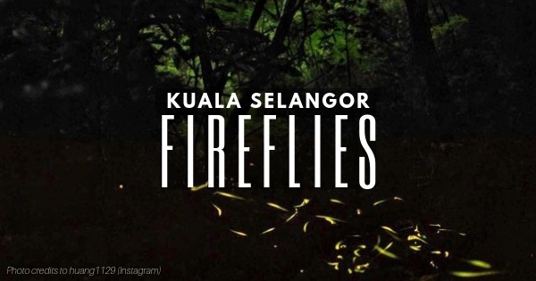 Kuala Selangor Fireflies: Spectacular Nature Night Show (Don't Miss Out!)