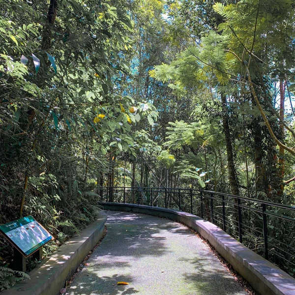 Leafy Forest Walkway At The Habitat Penang Hill