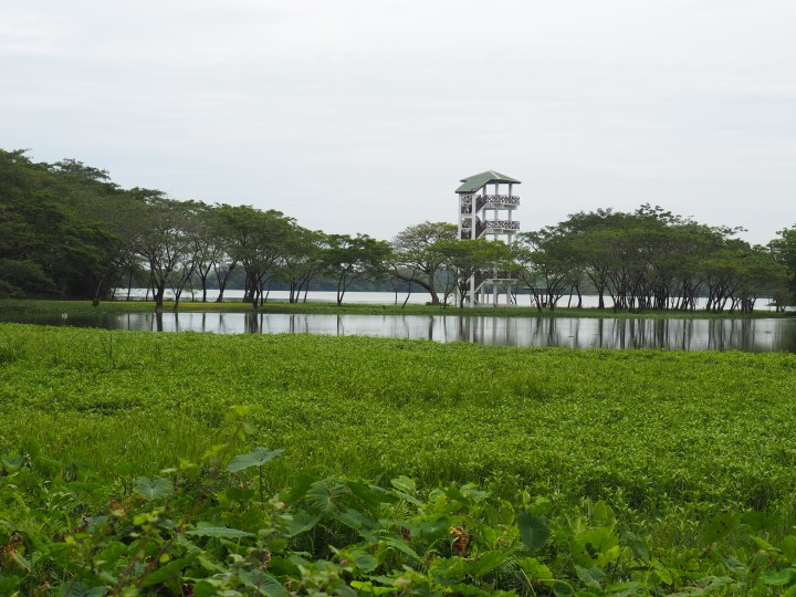 Lookout tower of Kinta Nature Park