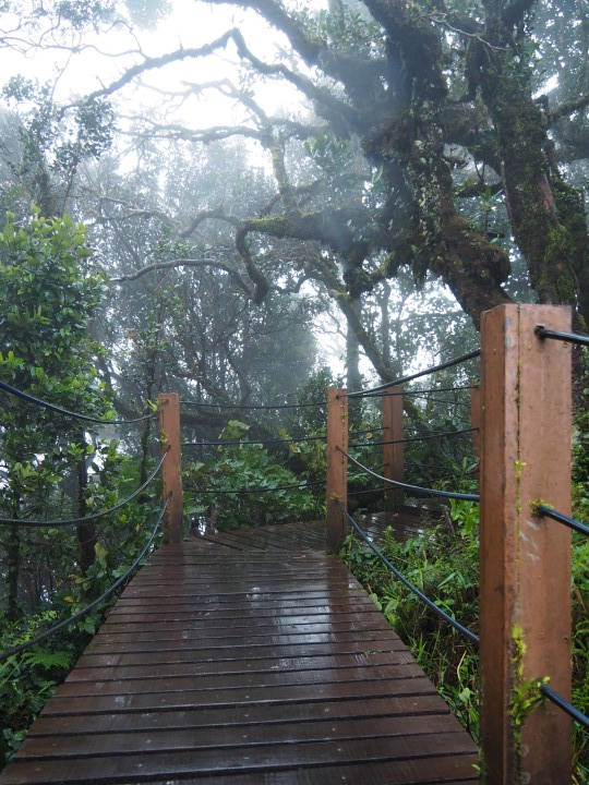 Slippery walkways in the mossy forest of Cameron Highlands