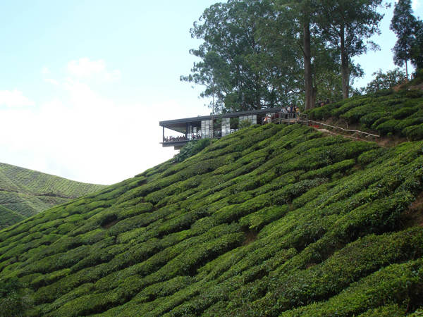 Teahouse At Sungai Palas BOH Tea Estate