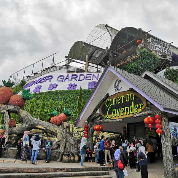 The entrance to Lavender Farm In Cameron Highlands